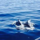 sailing trips in Skiathos with dolphins